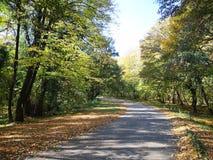 Fruska Gora. Autumn colours in Fruska Gora royalty free stock images