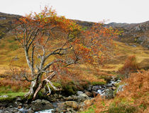 Autumn colours in Glen Affric Stock Images