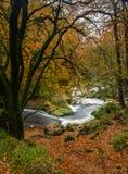 Autumn Colours, Golitha Falls, Cornwall royalty free stock image