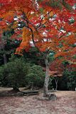 Autumn Colours in Japan Royalty Free Stock Photos