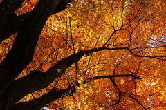 Autumn Colours in Japan Royalty Free Stock Photography