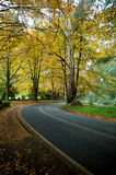 Autumn colours on a journey road, forrest. A journey trip through a Autumn forrest Royalty Free Stock Photos