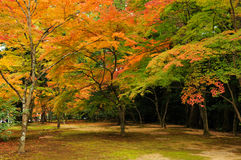 Autumn Colours in Kyoto. Autumnal orange and red colours of Japanese maple leaves at Kinkaku-ji temple, Kyoto, Japan royalty free stock photos