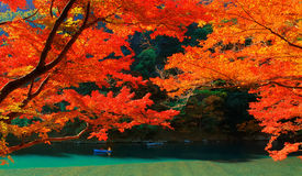 Autumn Colours in Kyoto. Autumnal orange and red colours of Japanese maple leaves near Katsura river in Arashiyama, Kyoto, Japan stock photos