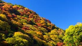 Autumn colours in Kyoto. Beautiful Fall Foliage in Arashiyama, Kyoto, Japan royalty free stock image