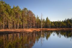 Autumn Colours in of the Swamps in Lahemaa National Park Estonia stock image