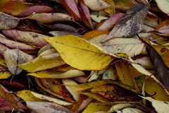 Autumn Colours Stock Photos