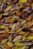 Autumn Colours Royalty Free Stock Photos