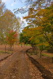Autumn colours and leaves on the ground Royalty Free Stock Images
