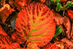 Autumn colours in Mont-Tremblant Park Royalty Free Stock Image