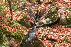Autumn colours in Mont-Tremblant Park Royalty Free Stock Photo