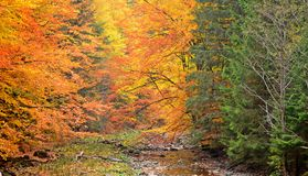 Autumn colours Royalty Free Stock Photo