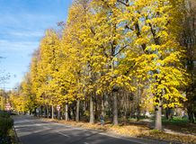 Autumn colours in Northern Italy. Taken in San Donato Milanese, Italy Royalty Free Stock Image