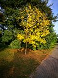 Autumn colours. Outdoor park in Gdansk Zaspa, Poland Stock Images