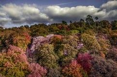 Autumn Colours. Photo taken in the China town area of Melbourne Australia Royalty Free Stock Photos
