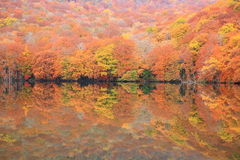 Autumn colours of pond Royalty Free Stock Image