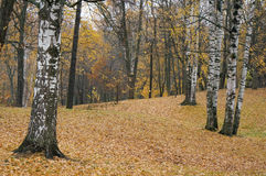 Autumn colours of rainy day in PETERHOF, RUSSIA Royalty Free Stock Photography