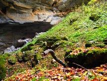 Autumn Colours recente Fotografie Stock Libere da Diritti