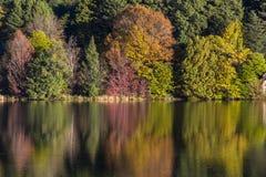 Autumn colours reflection. South Africa Stock Photos