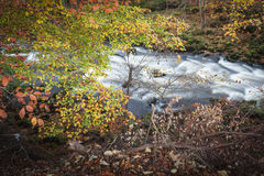 Autumn colours by River Deveron. Near Huntly in Scotland Stock Photo