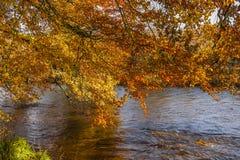 Autumn colours, riverside walk, November 2011 Stock Image