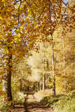 Autumn colours, riverside walk, November 2103 Royalty Free Stock Photos