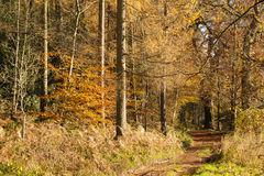 Autumn colours, riverside walk, November 2103 Royalty Free Stock Photo