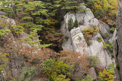 Autumn colours on rock outcrops Royalty Free Stock Photo