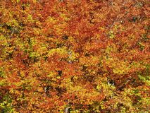 Autumn colours in Romania. Typical autumn colours foliage at Doftana River Valley, Prahova County, Romania Royalty Free Stock Photography