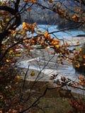 Autumn colours in Romania. Typical autumn colours at Paltinu lake, Doftana River Valley, Prahova County, Romania Stock Image