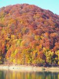 Autumn colours in Romania. Typical autumn colours at Paltinu lake, Doftana River Valley, Prahova County, Romania Royalty Free Stock Images