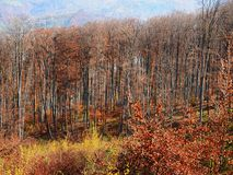 Autumn colours in Romania. Typical autumn colours at Doftana River Valley, Prahova County, Romania Stock Images