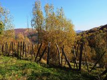 Autumn colours in Romania. Typical autumn colours at Doftana River Valley, Prahova County, Romania Stock Photography