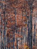 Autumn colours in Romania. Typical autumn colours foliage at Doftana River Valley, Prahova County, Romania Royalty Free Stock Photo