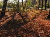 Autumn colours in Romania. Typical autumn colours on a road at Doftana River Valley, Prahova County, Romania Royalty Free Stock Image