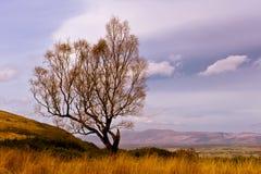 Autumn colours  - single tree Royalty Free Stock Photo