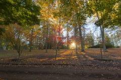 Autumn colours and sun rays Stock Photo