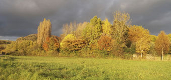 Autumn Colours Royalty Free Stock Image