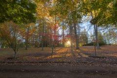 Autumn colours at sunrise Royalty Free Stock Photo