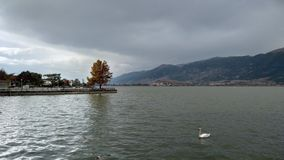 Autumn colours and a swan. Lake Pamvotis Ioannina royalty free stock photos