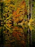 Autumn colours Royalty Free Stock Photo