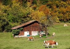 Autumn colours in Switzerland Royalty Free Stock Image