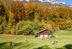 Autumn colours in Switzerland Stock Photography