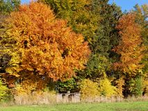 Autumn colours in Switzerland Royalty Free Stock Photography