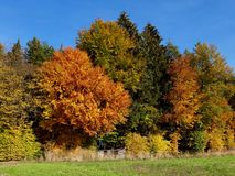 Autumn colours in Switzerland Royalty Free Stock Photos