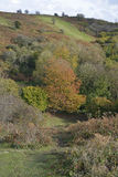 Autumn Colours. At top of Cheddar Gorge, Somerset Stock Photography