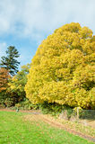 Autumn colours from the trees in Herefordshire. Stock Images