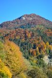 Autumn Colours - Trees on a hill in Slovakia royalty free stock photography