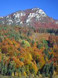 Autumn Colours - Trees on a hill in Slovakia royalty free stock images