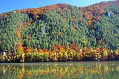 Autumn Colours - Trees on a hill in Slovakia reflecting in a lake stock photography